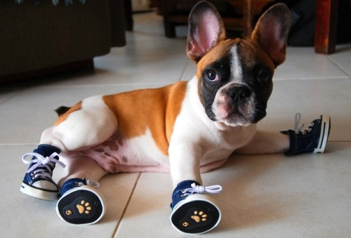 Dogs Wearing Shoes on Pinterest | Dogs, Shoes and Dog Cat