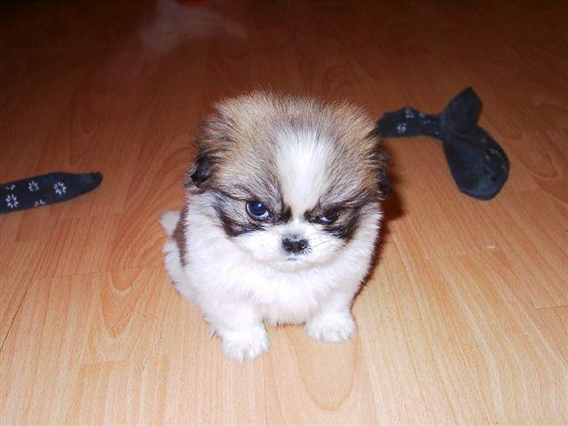 mean dogs | thetortoiseruns